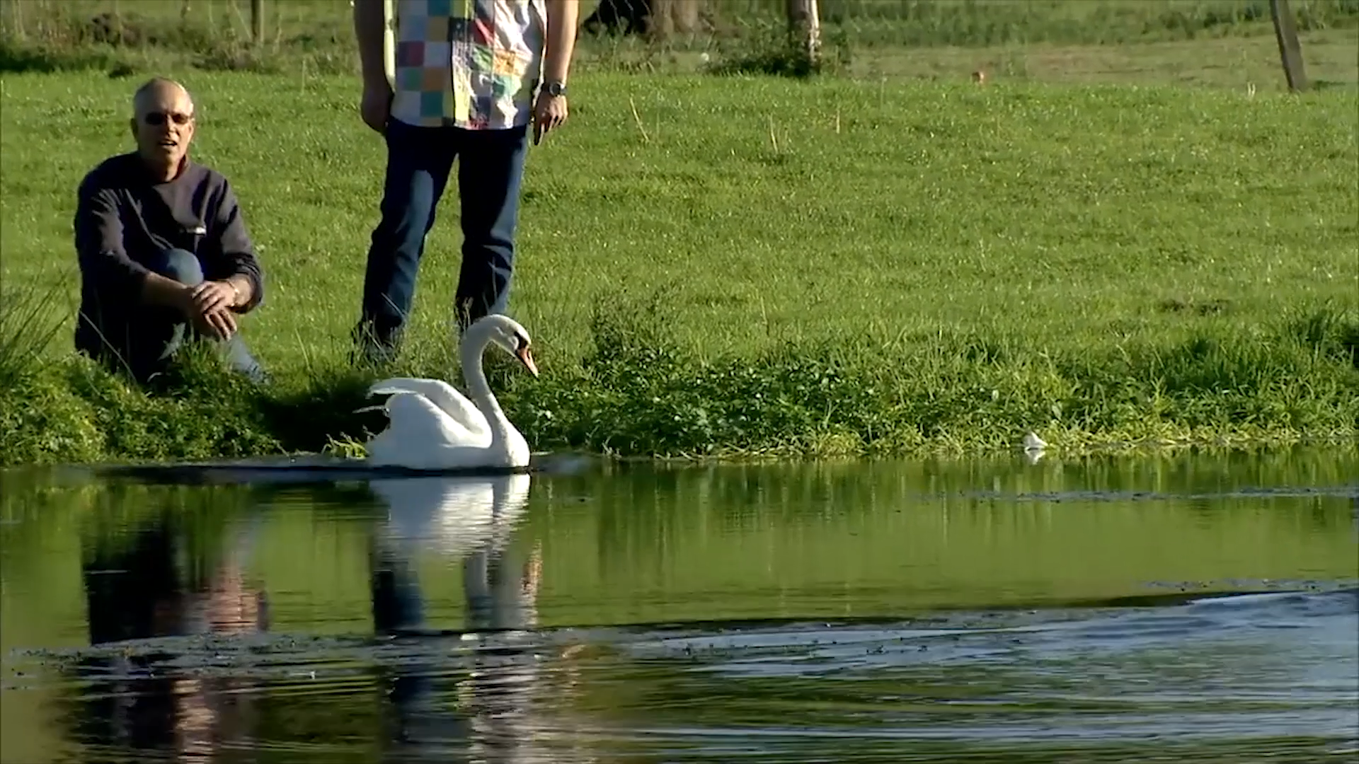 A swan is released by the team at the Wildlife Aid Foundation in Leatherhead as seen on Channel 5's Wildlife SOS.