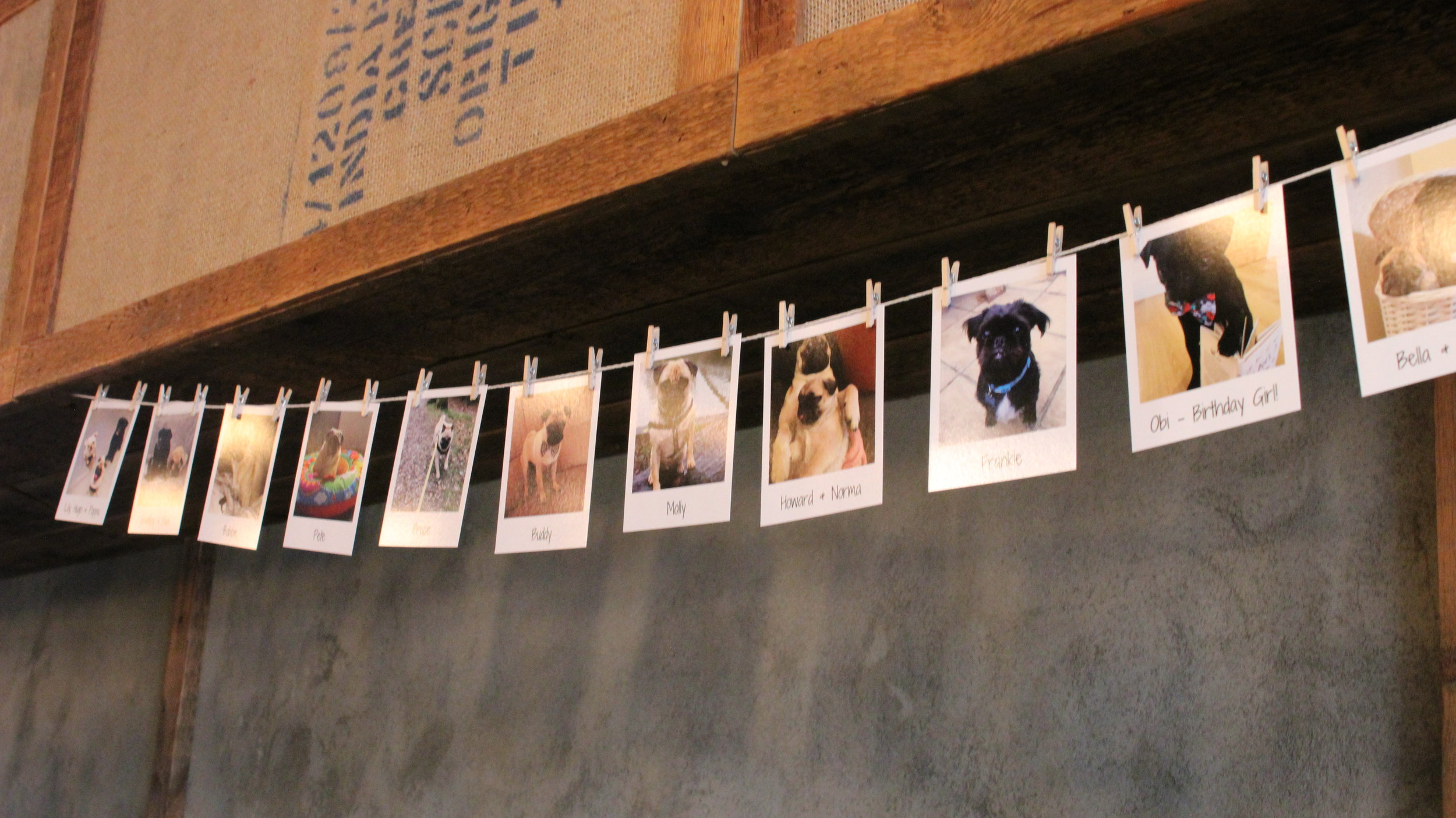 Polaroid Photographs of all the pugs attending the first ever Pop Up Pug Cafe in Guildford.
