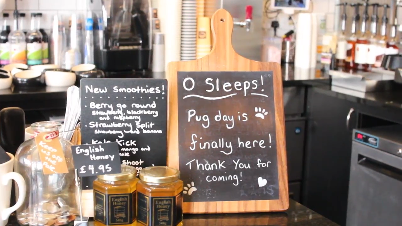 The countdown to the opening of Guildford's Pop Up Pug Cafe at Esquires Coffee Shop Guildford.