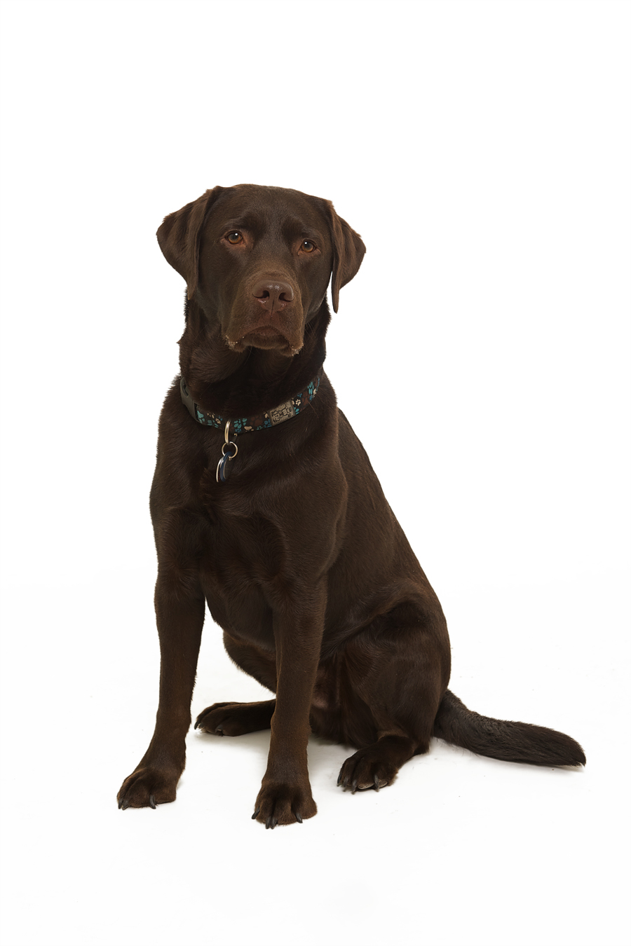 Blue has had a long and successful career with the IHD security detail. He fills his days chasing squirrels,taking naps by the front door, and going along on field review when his services are required.