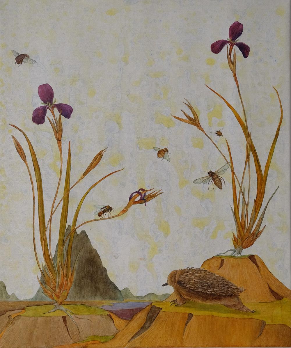 shortbeaked echidna and genosirius fragilis2.jpg