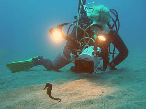 Guylian Seahorses of the World