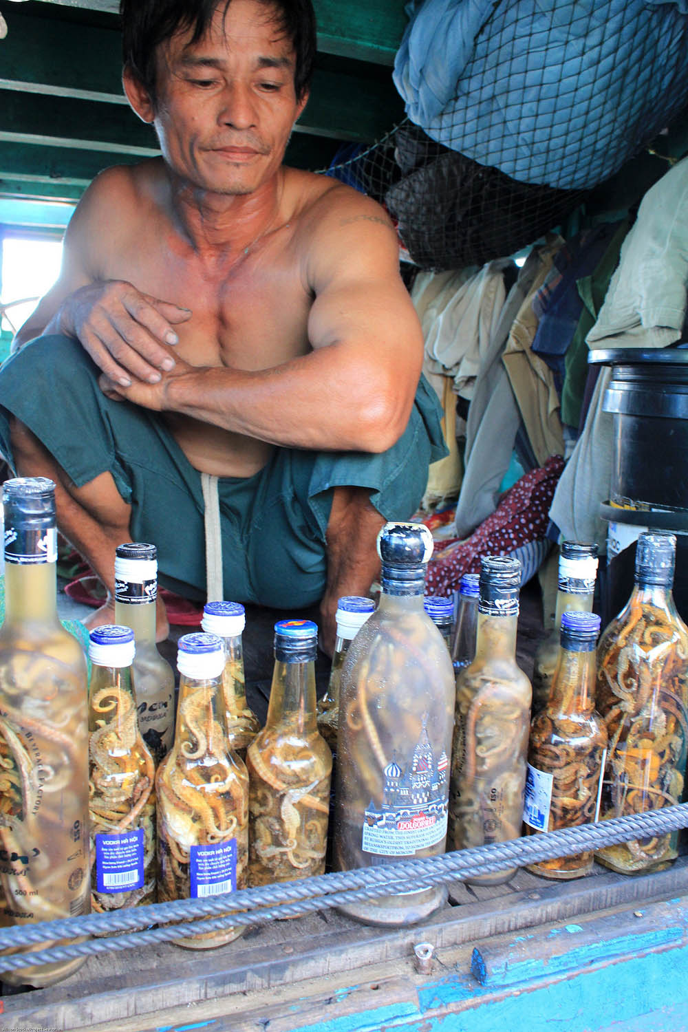 This fisher showed me his homemade seahorse tonic – these are seahorses he'd caught in the past month and bottled with alcohol. These are small seahorses that buyers weren't likely to purchase. The tonics are sold by fishers or given away as gifts (or kept for personal use). They are used to treat various ailments from kidney pain to impotence.   A. Stocks/Project Seahorse