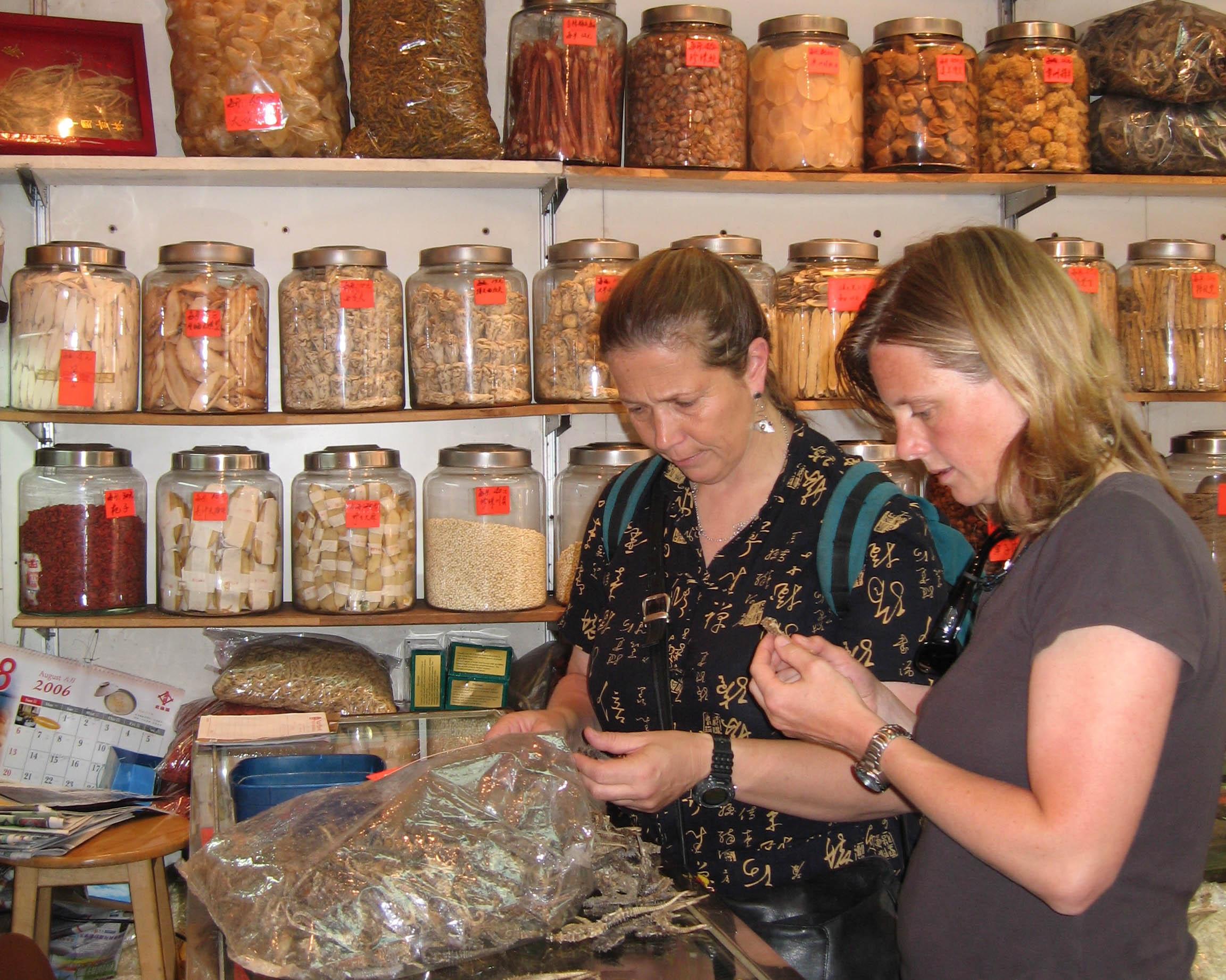 Drs. Vincent and Koldewey examining dried seahorse specimens.  Amanda Vincent/Project Seahorse