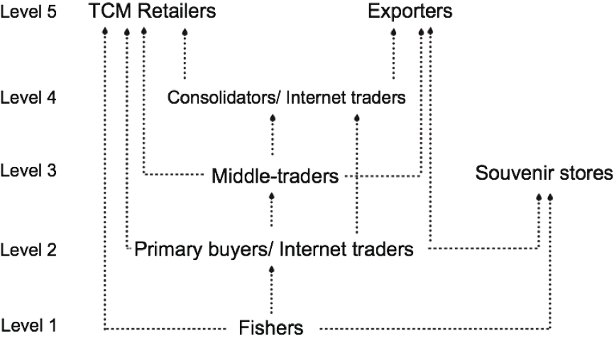 Figure 1. Dried seahorse trade structure in Thailand. Arrows indicate the direction seahorses were sold.