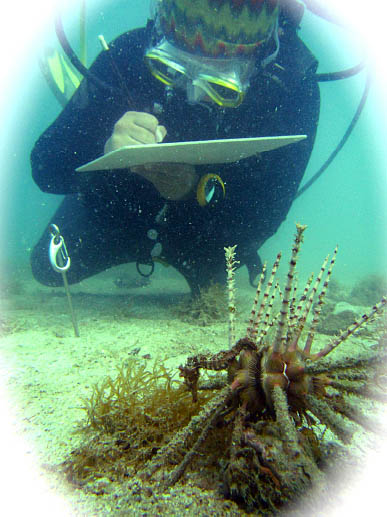 Diving with hedgehog seahorses.  Lindsay Aylesworth/Project Seahorse