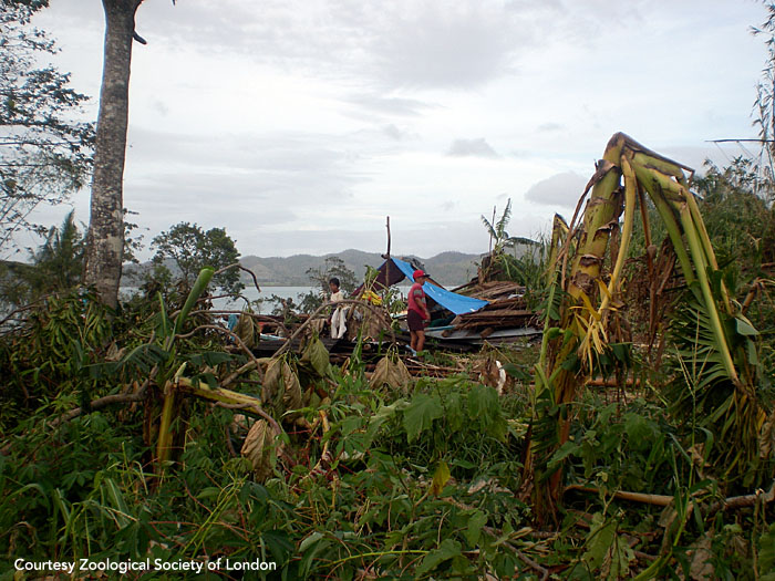 A family stands outside the tent they've set up amid the rubble of their home. Panay, Philippines.  Photo courtesy of ZSL