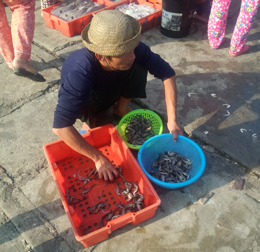 "Although seahorses are protected animals in China, there are ""black markets"" at fishing ports where fresh seahorses are sold in broad daylight. Here a fisher in Qinglan, Hainan Province sorts out seahorses based on their sizes into two plastic baskets."