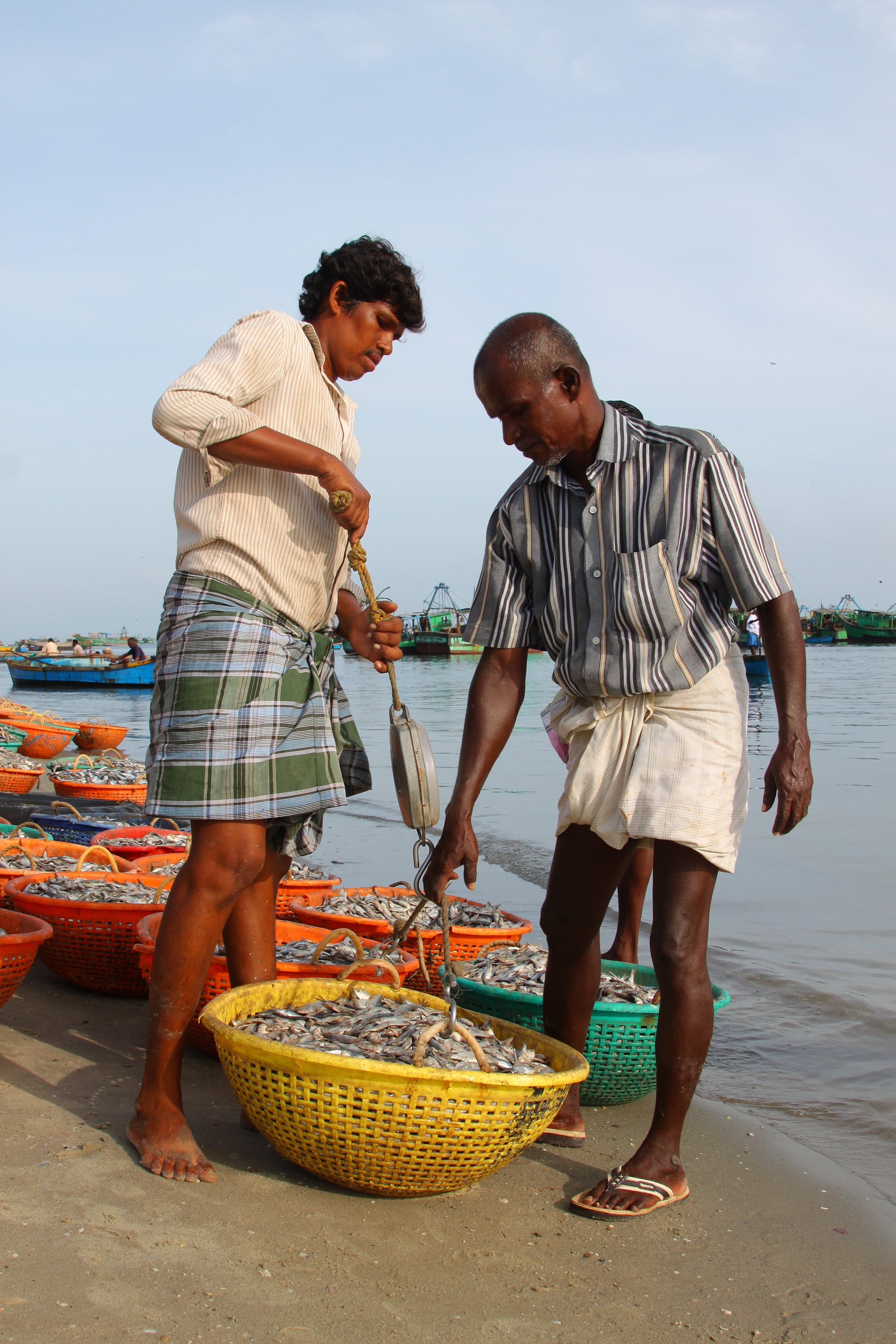 Buyers from chicken farm and fish oil plants come directly to the shore to buy the bycatch from the trawlers. Bycatch which has a greater fish composition is sold at greater rates than those with mixed composition (e.g. with crustaceans, shells etc).  Photo by Tanvi Vaidyanathan/Project Seahorse.