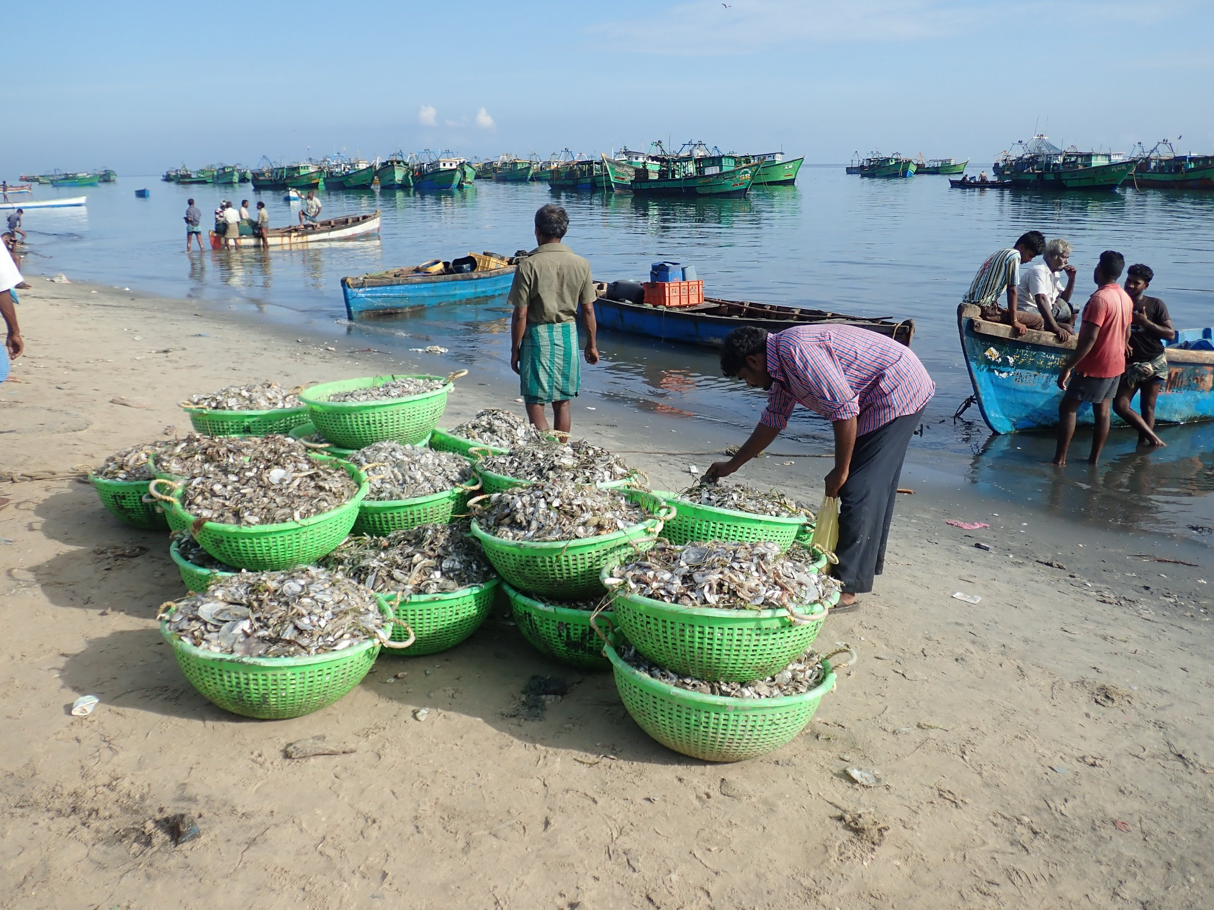 Baskets of miscellany (bycatch) destined for chicken feed. Mandapam North, India. Photo by Amanda Vincent/Project Seahorse.