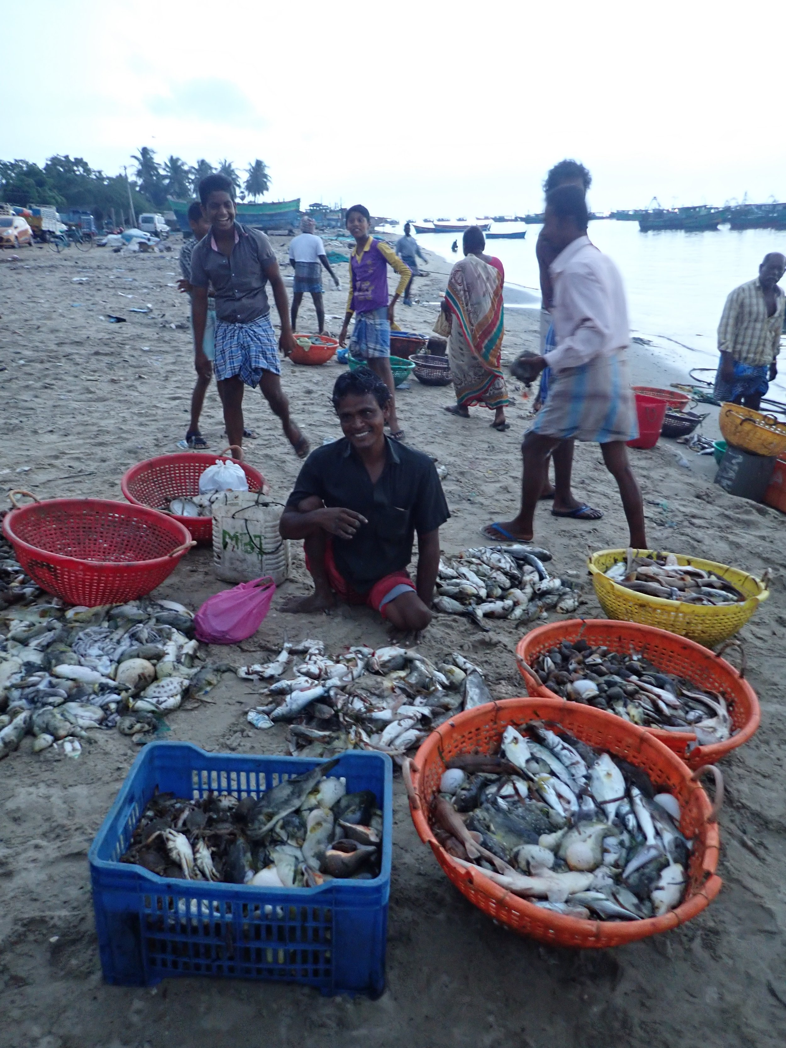 Sorted piles of marine life at a trawl landing site, Mandapam North, India. Photo by Amanda Vincent/Project Seahorse.