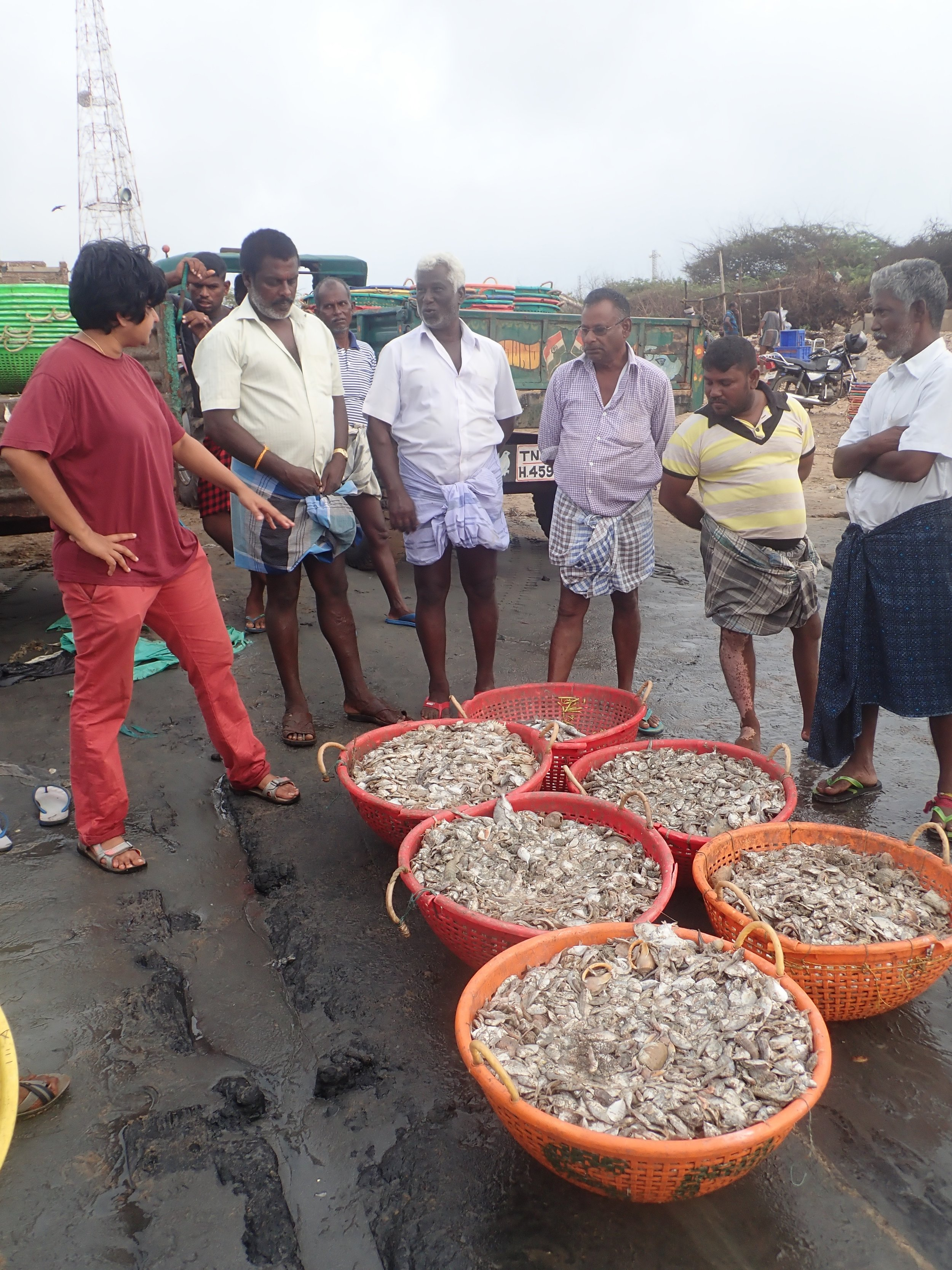 Project Seahorse PhD student Tanvi Vaidyanathan talking to fishers about the baskets of miscellany (bycatch) destined for chicken feed. Mandapam South, India. Photo by Amanda Vincent/Project Seahorse.
