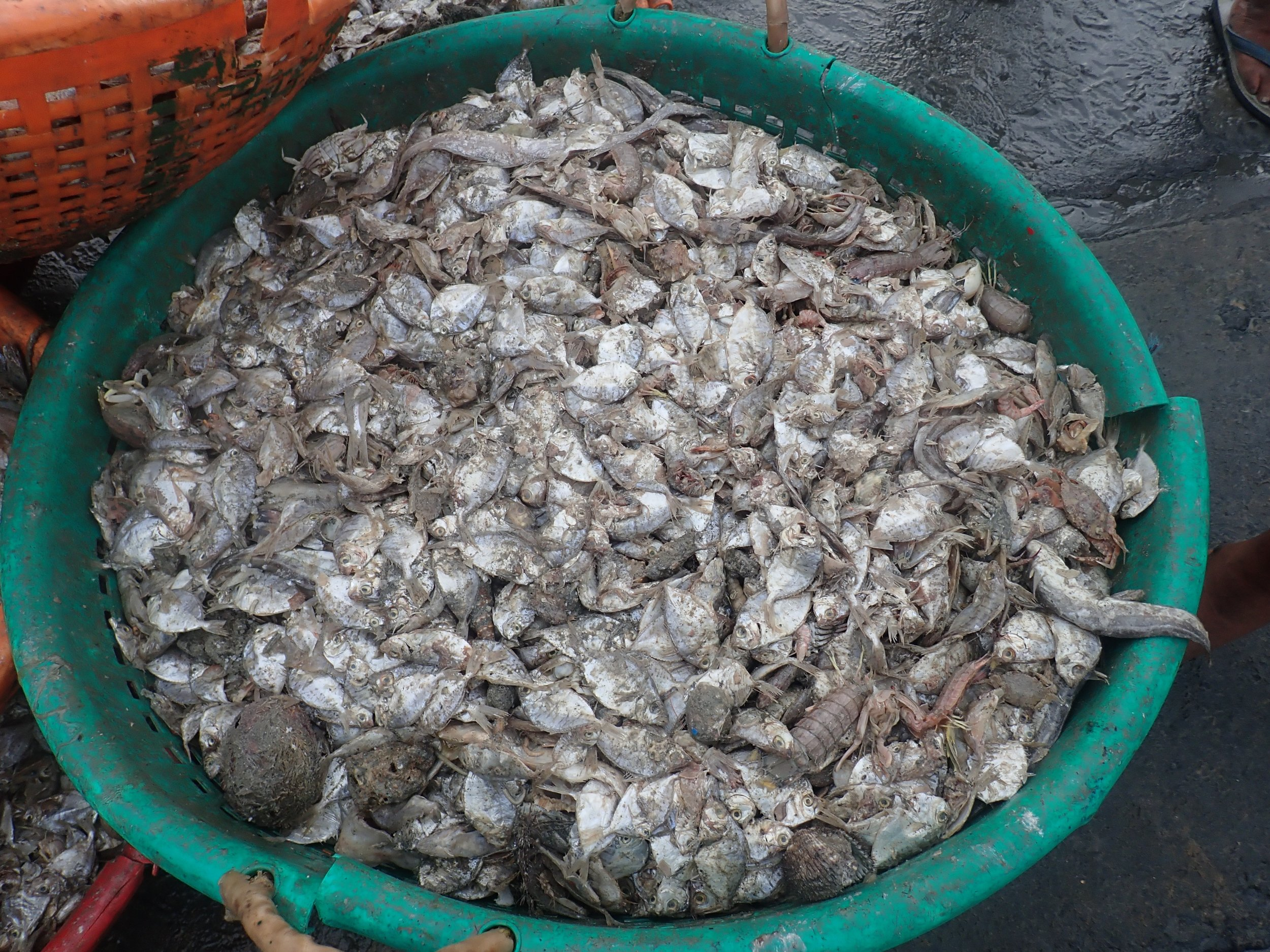 Mandapam south - baskets of miscellany (bycatch) destined for chicken feed.jpg