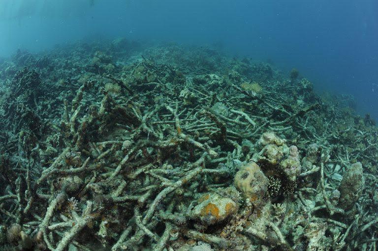 Results of dynamite fishing on Danajon Bank, Philippines. Credit: Thomas P. Peschak