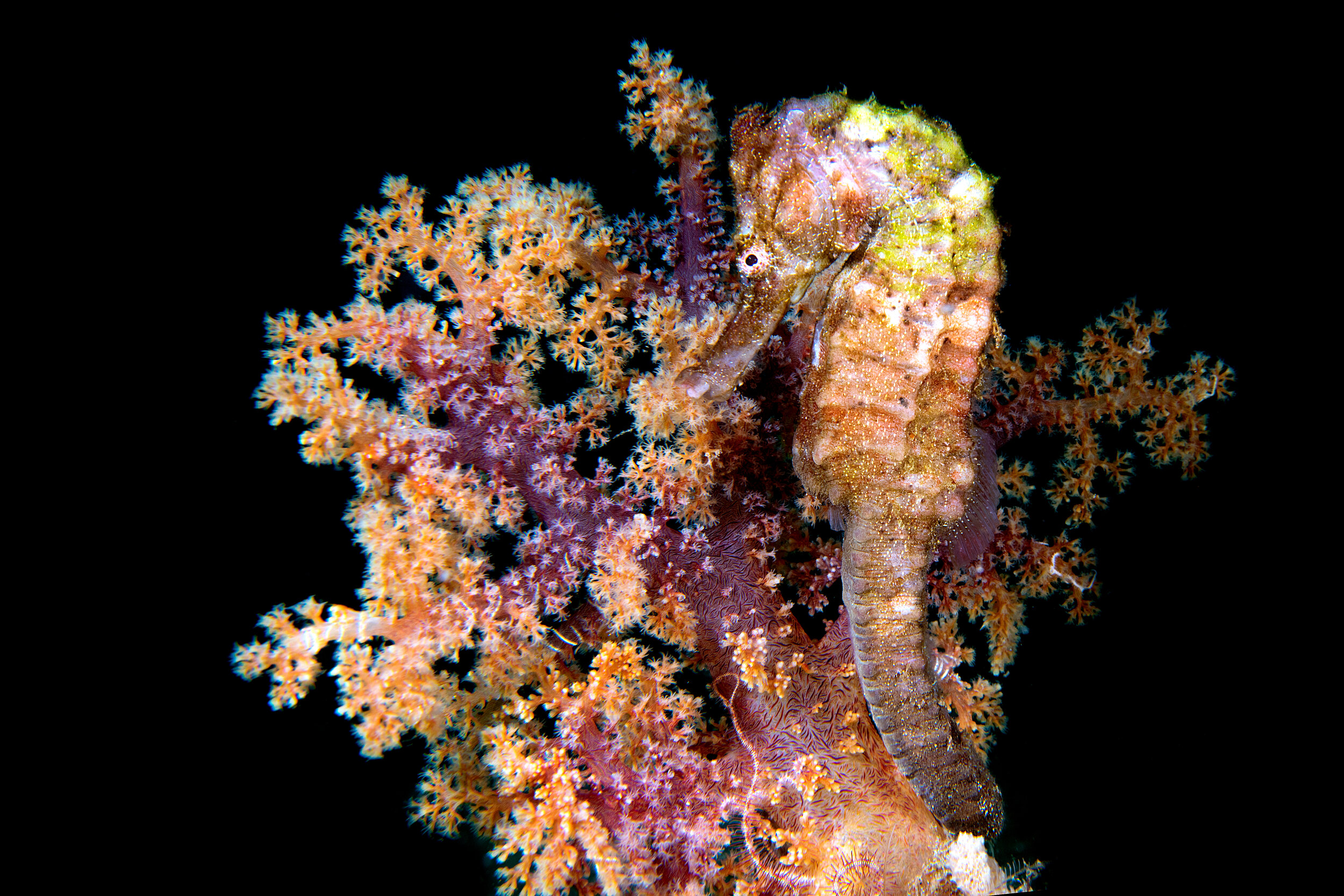 Commentary   New hope for seahorse conservation 18 years after CITES listing   You can read about our current big breakthrough in engaging 182 countries to strengthen export regulations on seahorses   Read more  >