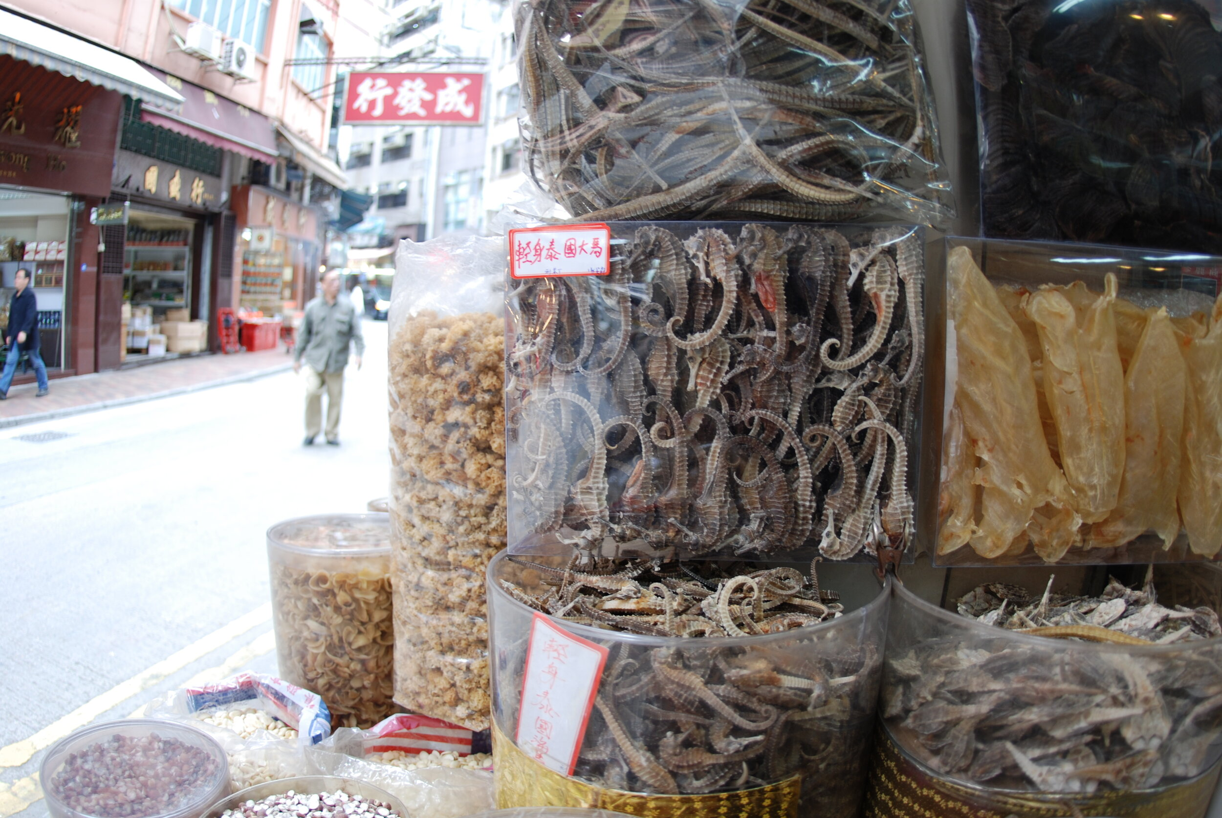 Dried seahorses for sale in a market in Hong Kong.  Photo by Tyler Stiem/Project Seahorse.