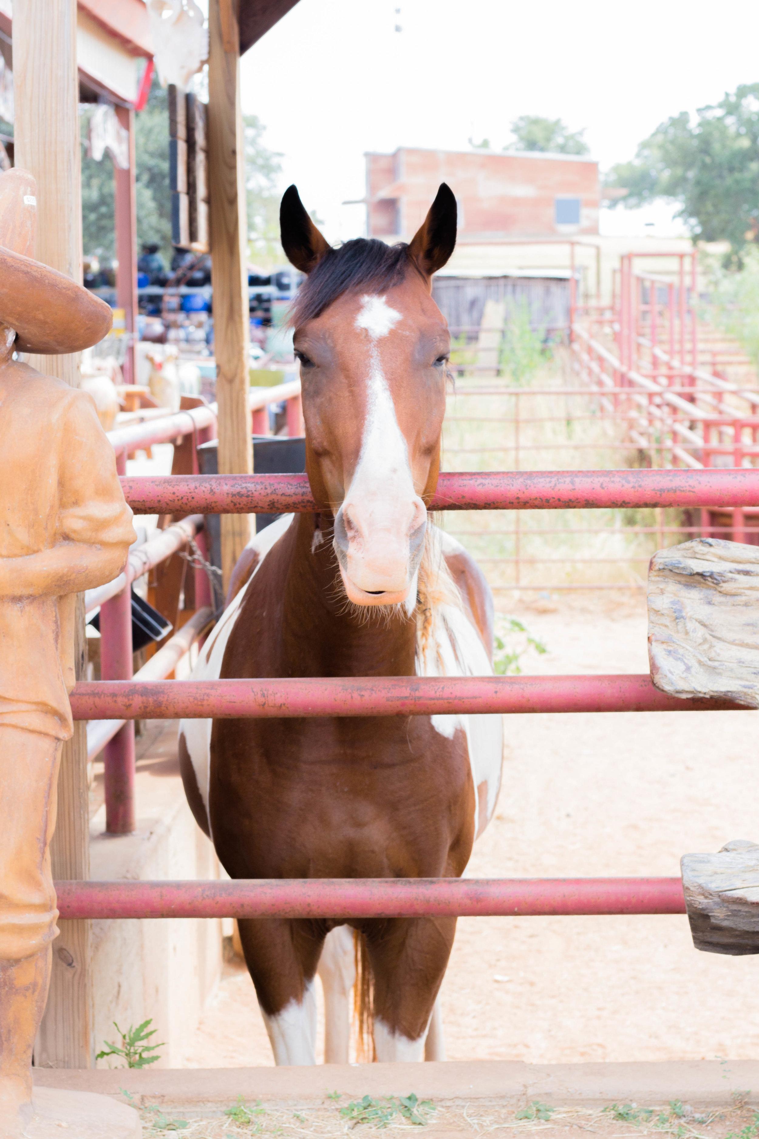RanchSeptember-4.jpg