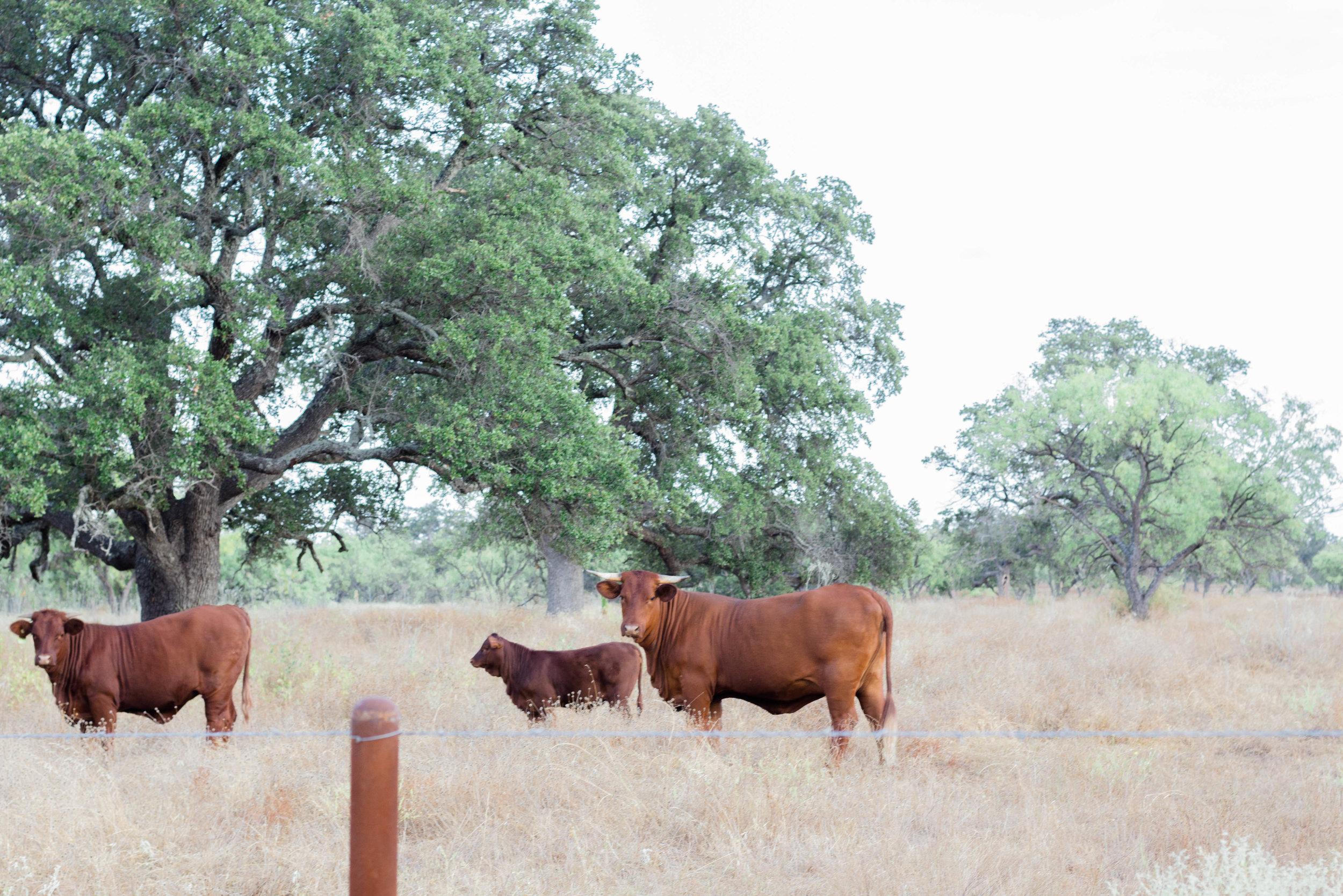 RanchSeptember-28.jpg