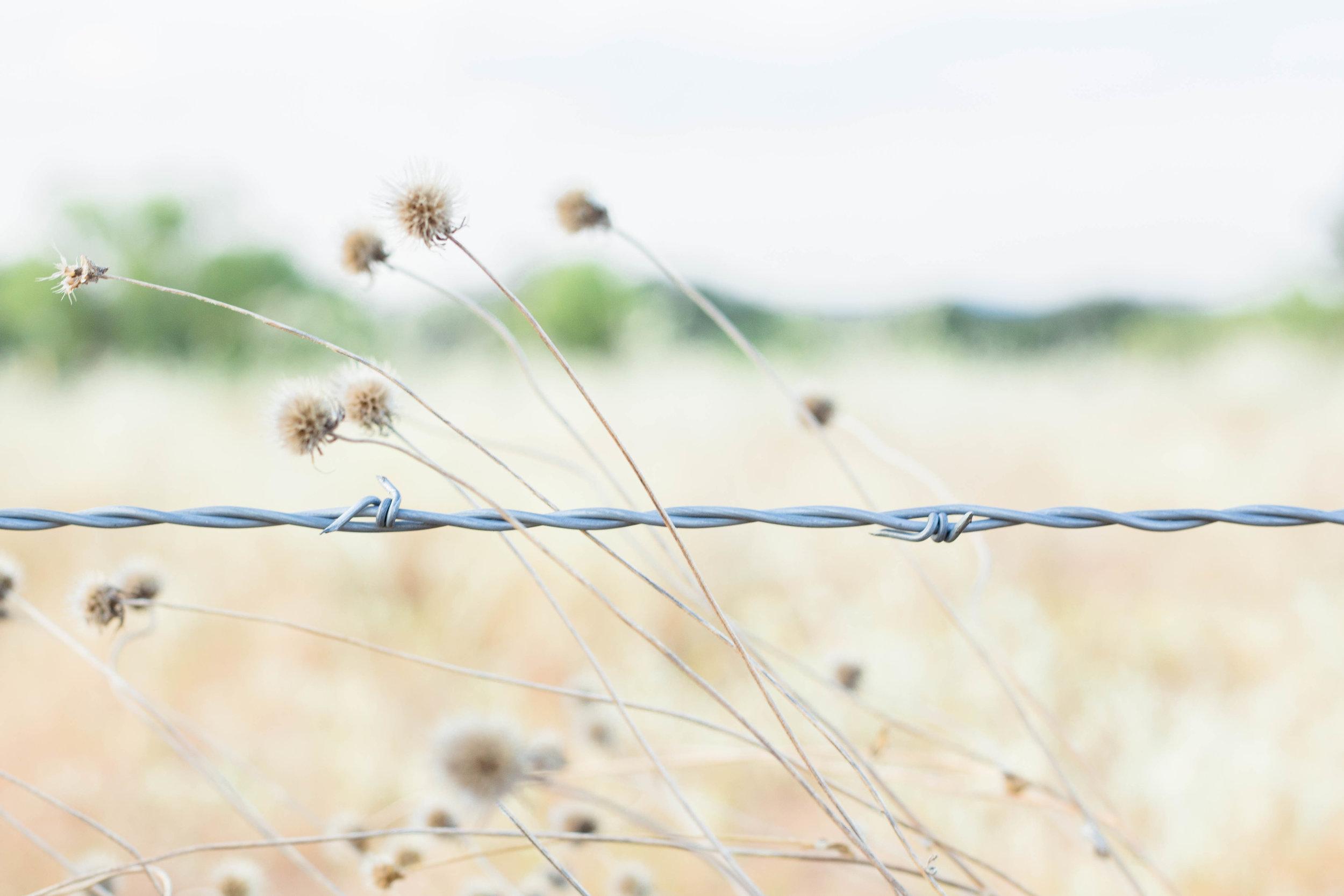 RanchSeptember-41.jpg