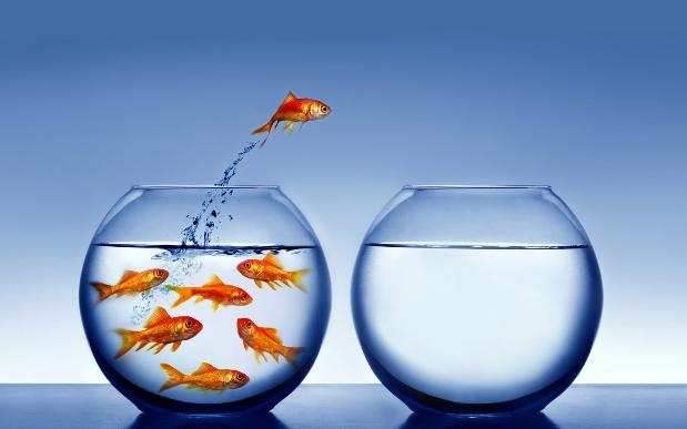 Goldfish2.png