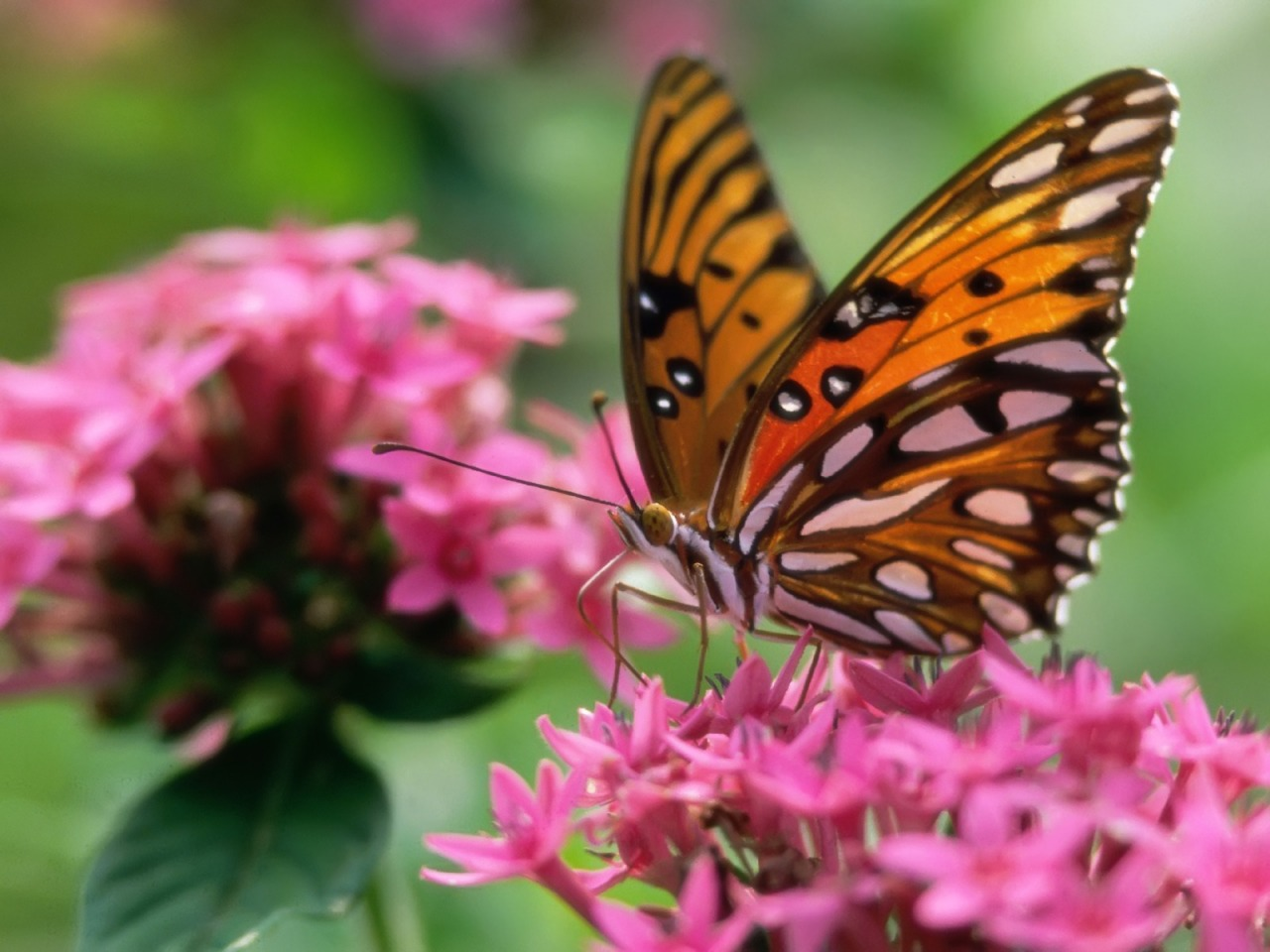 Butterflies bright wings against the muted green background and fuchsia pink flowers is a stunning combination.