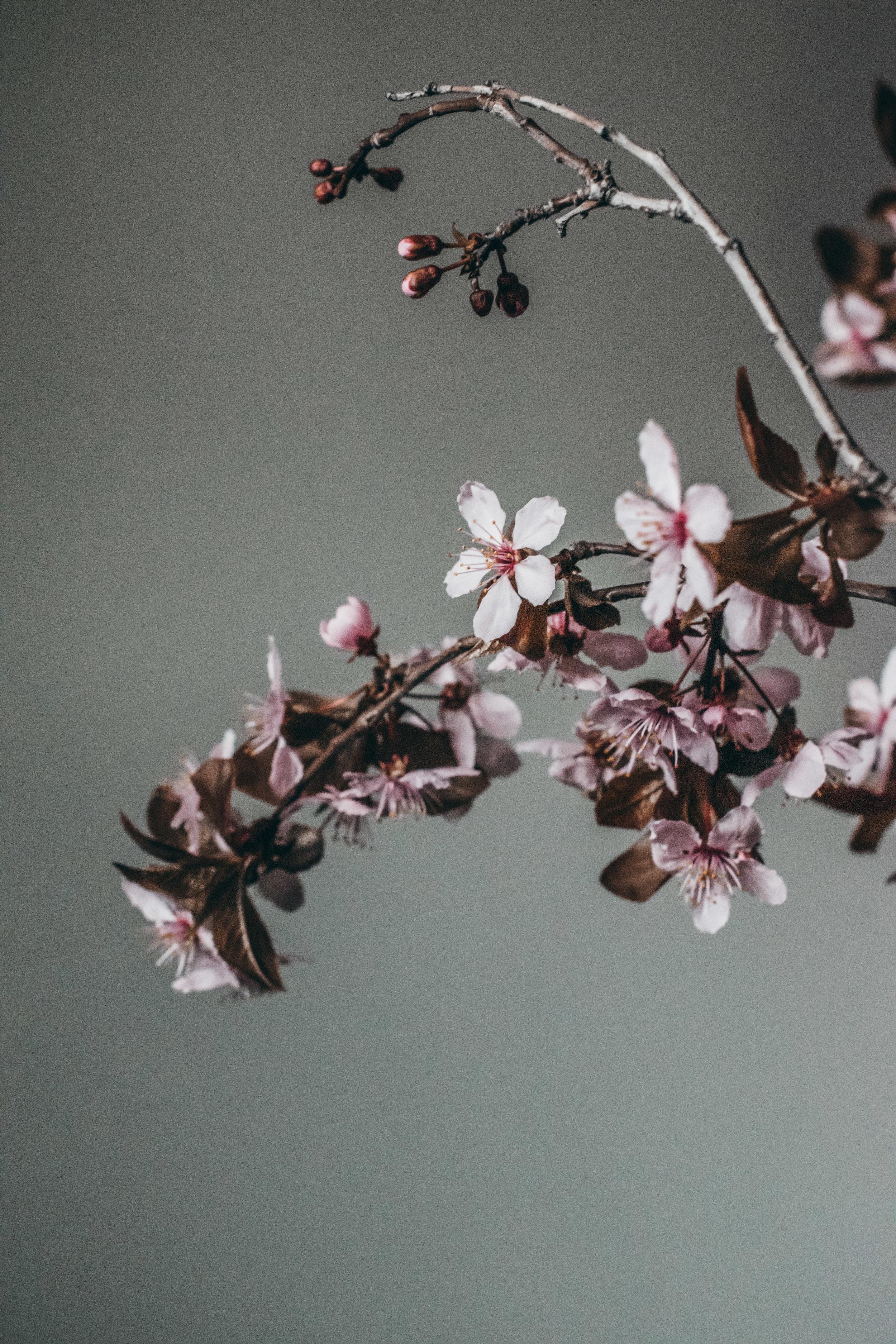 Beehive Floral-0169.jpg