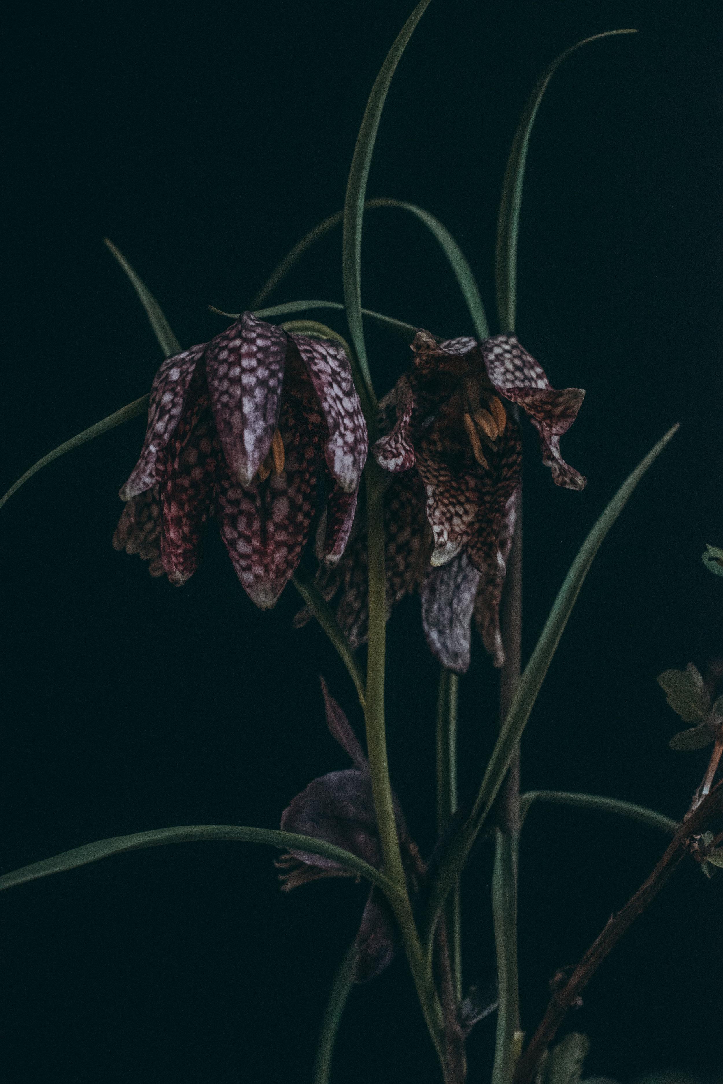 Beehive Floral-0156.jpg