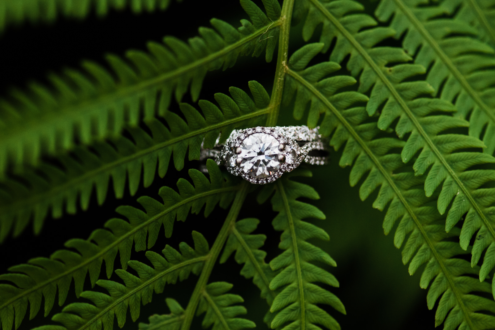 Ring on fern plant at barn wedding in pa