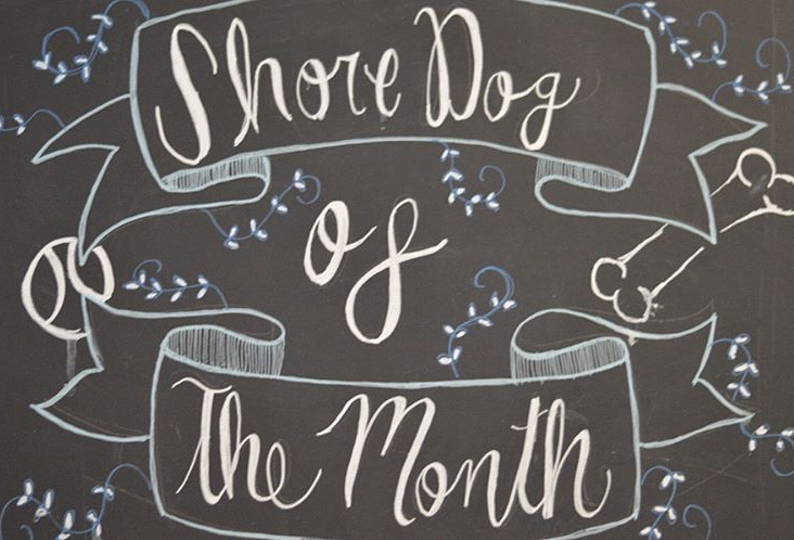 - HOW TO ENTER:Every start of the month we choose a new Shoredog in honor of our original shore dog, Mallie. To enter your dog, just tag us on social media (either Instagram or Facebook) and include the hashtag #shoredogofthemonth with a picture of your shore dog for the chance to be selected!