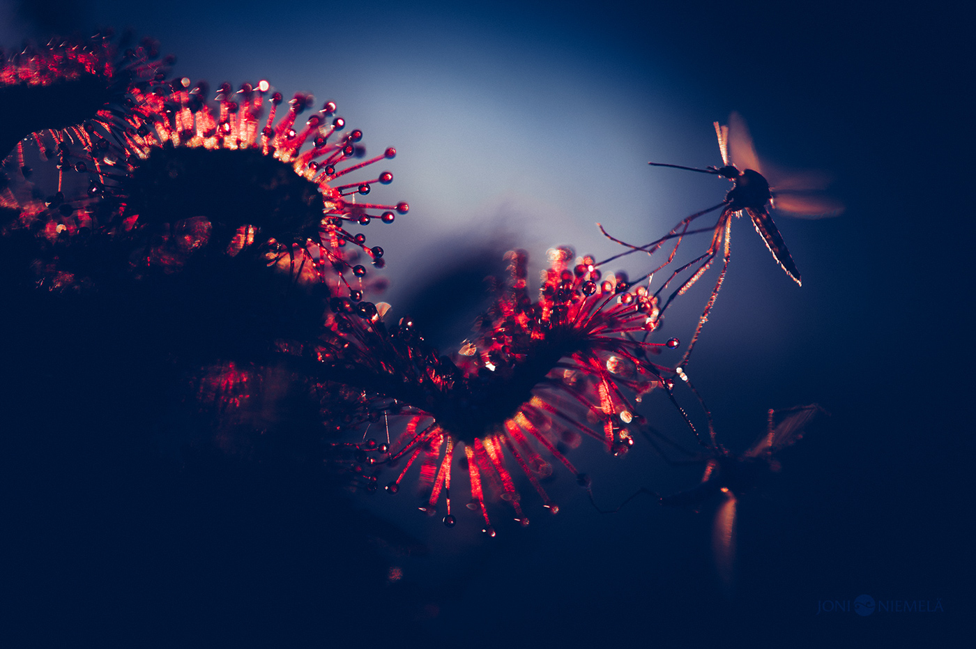 Joni Niemelä,  Otherworldly Blues