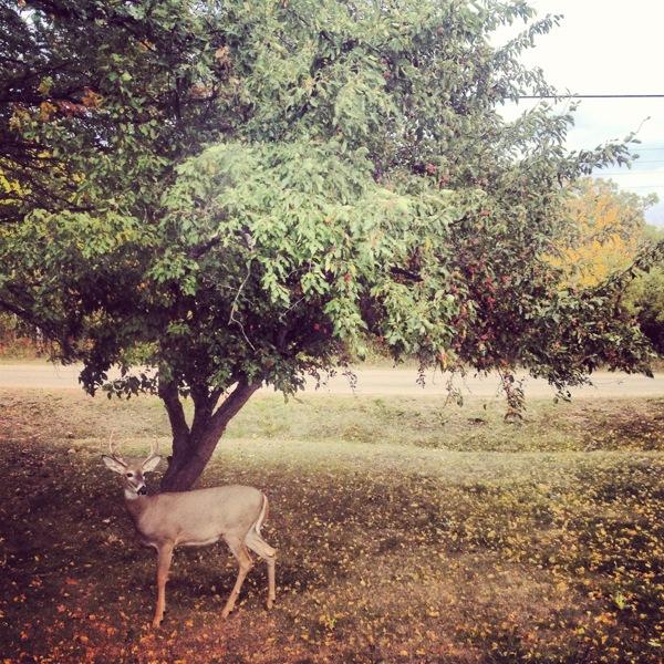 Zack Chill,  Dear Deer