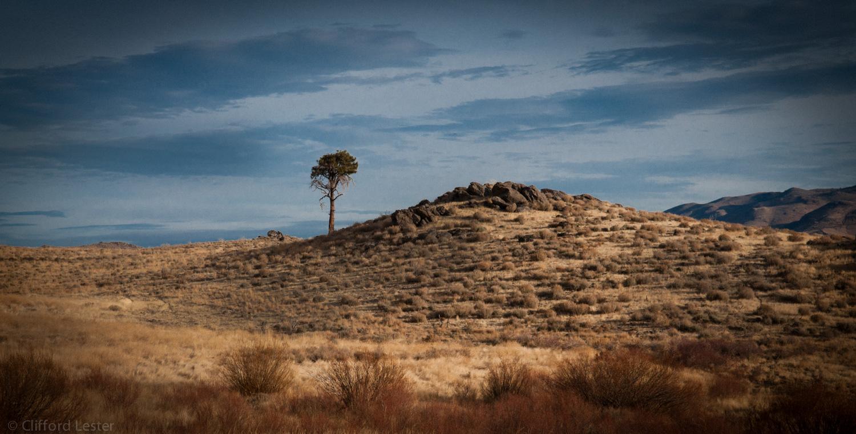 Carson City Wilderness