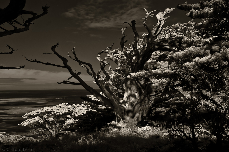 Monterey Coast I