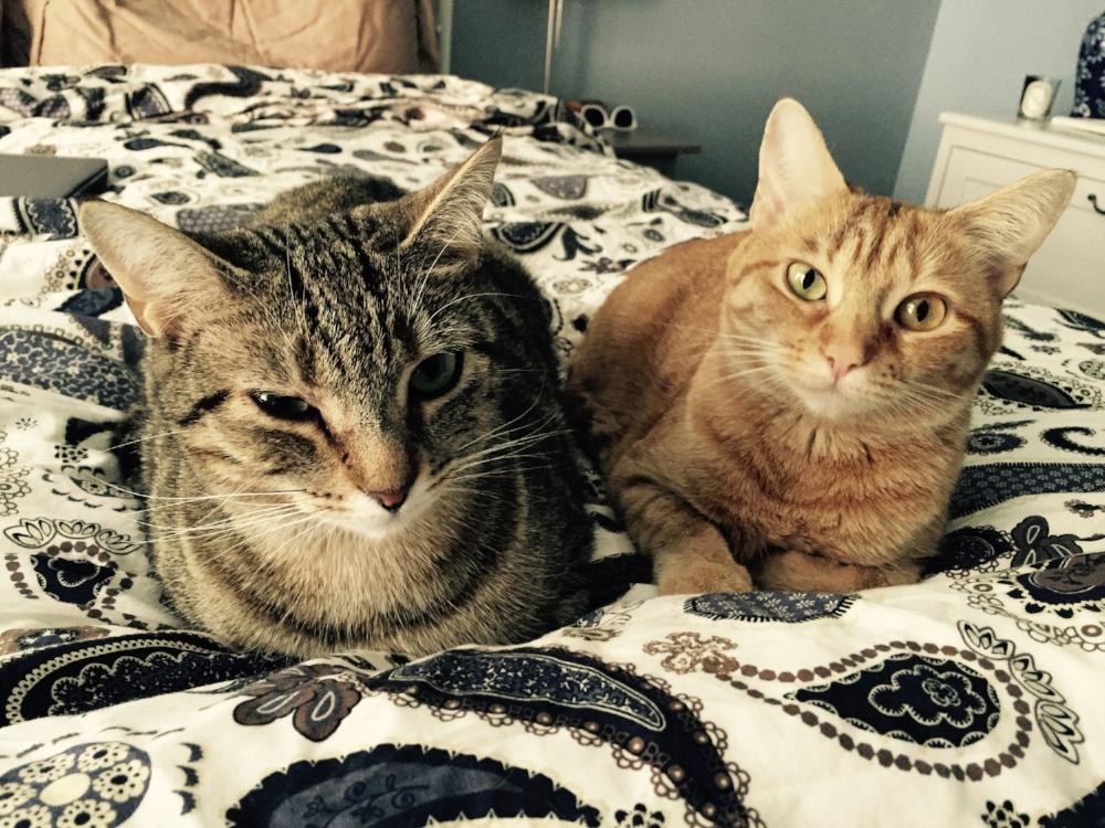 Lulu and Penny