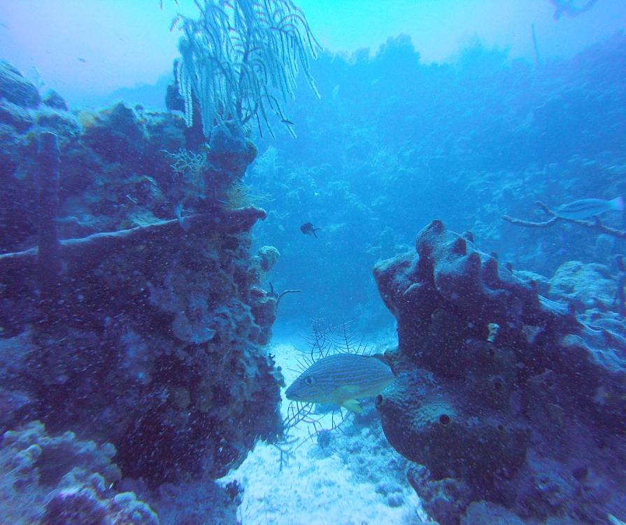 marine life in grand cayman