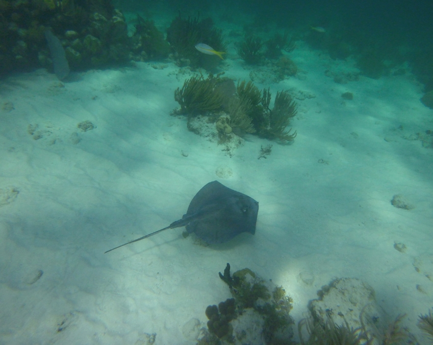 Marine life in its natural environment - Grand Cayman, Cayman Islands