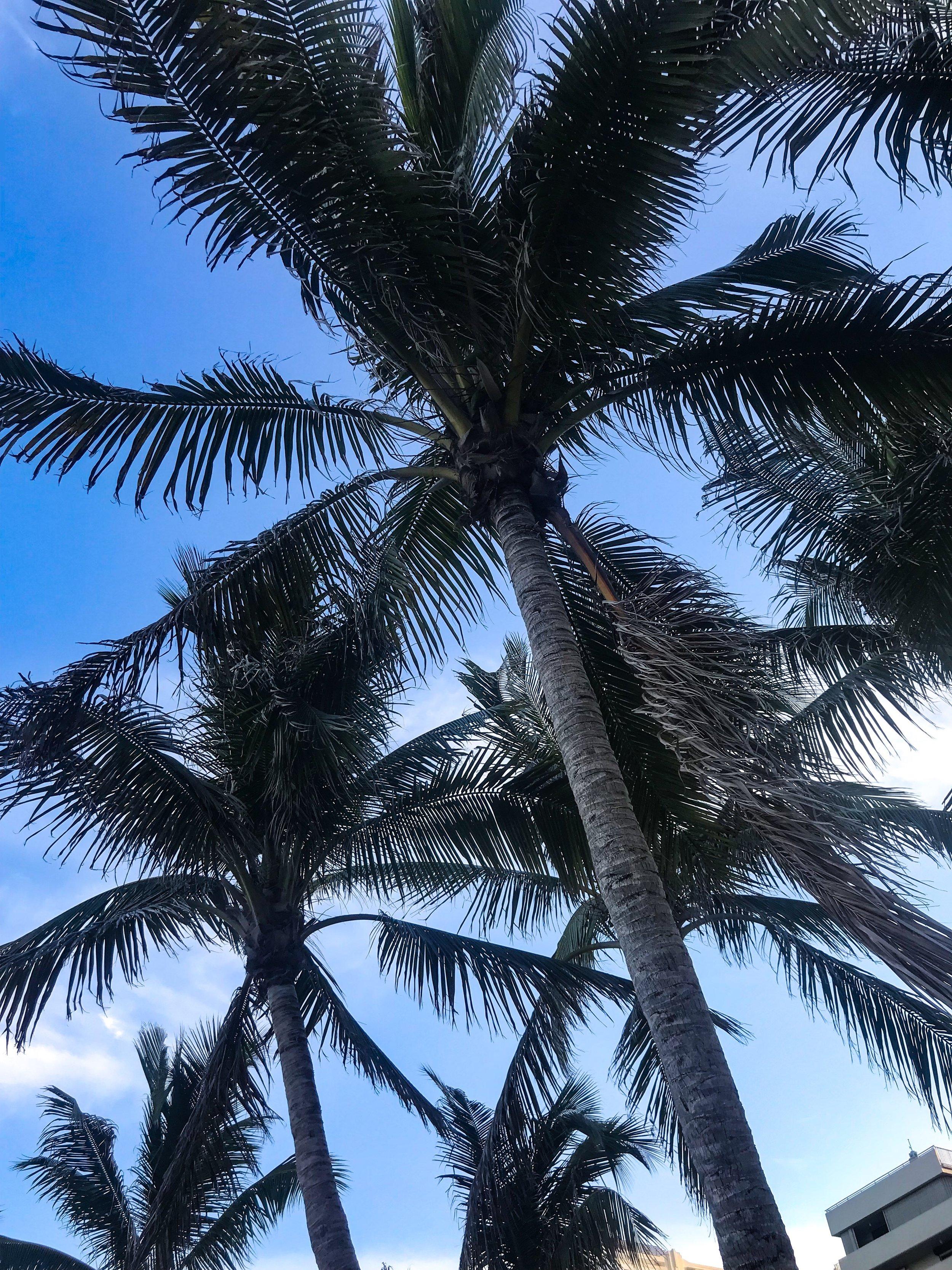 Miami Palm Tree.jpg