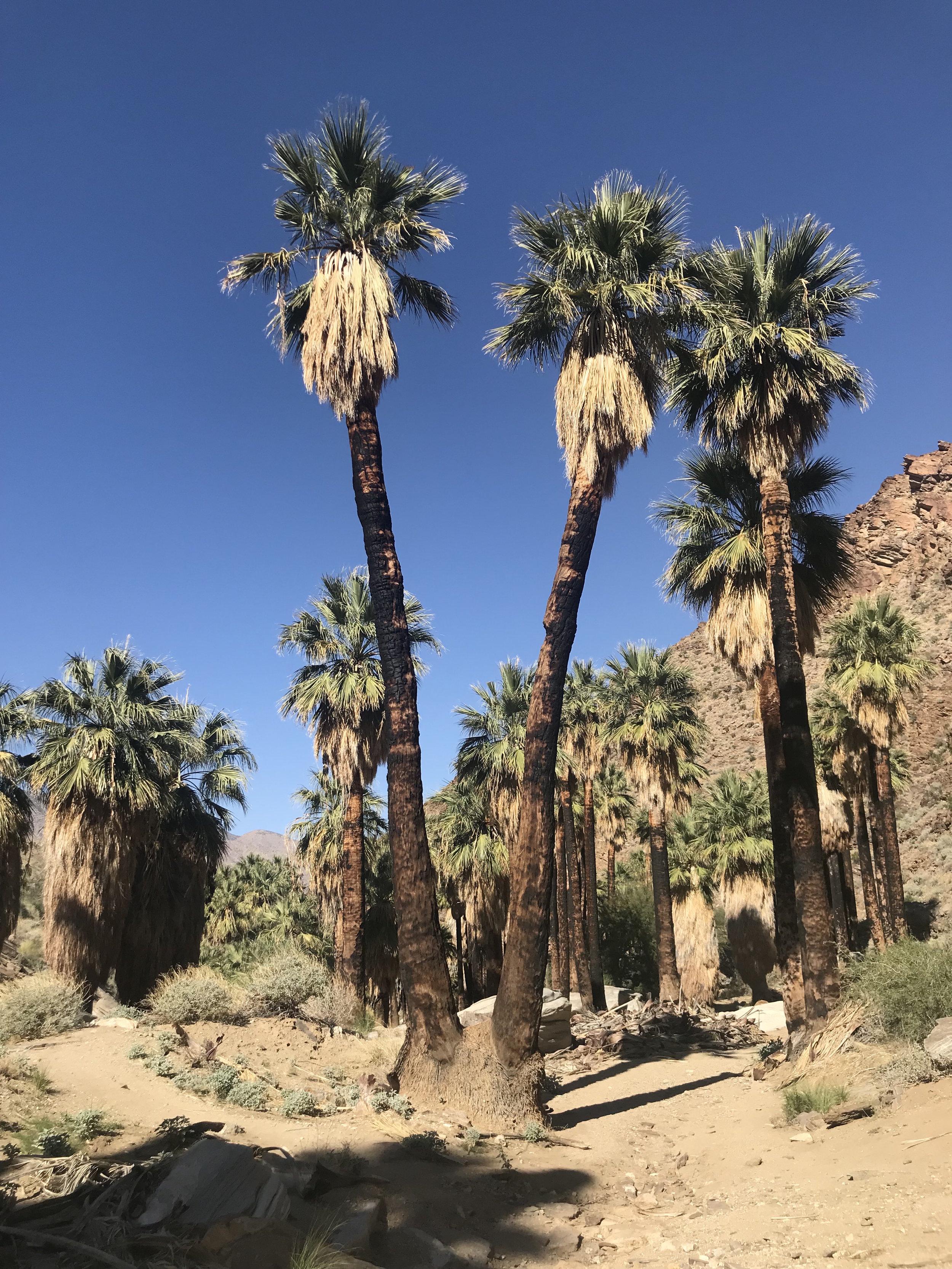 Palm Canyon.jpeg