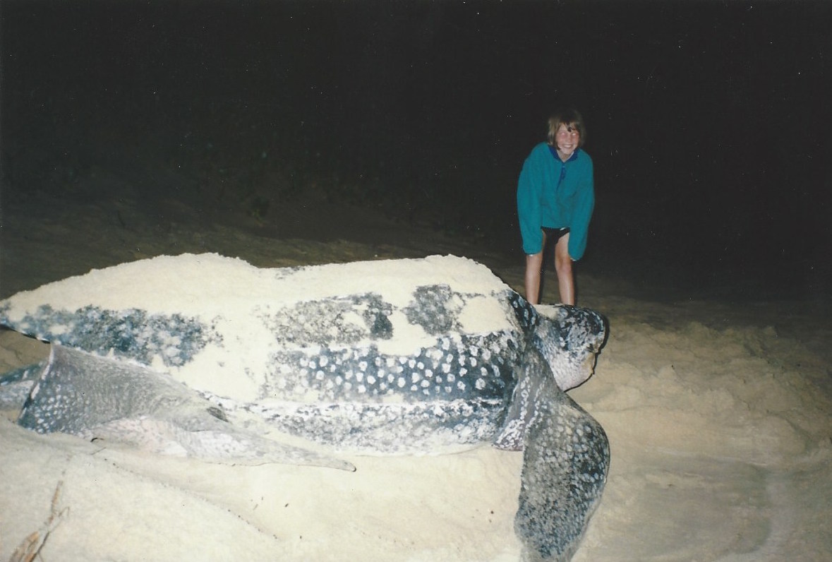 Fig.1 Our family's first turtle sighting in South Africa, 1997. My sister alongside a nesting leatherback sea turtle.