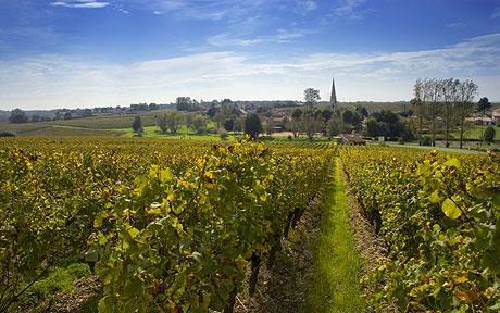 wine-landscape_801392c.jpg