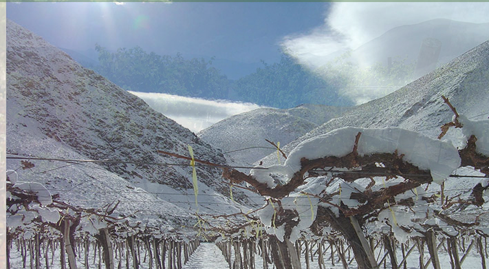 Huanta Vineyard