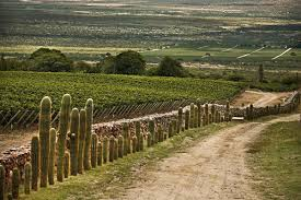 catamarca vineyard