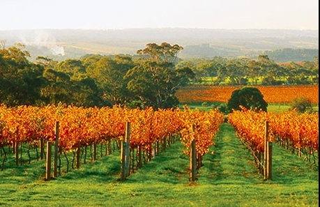 Pennys hill vineyard McLaren vale