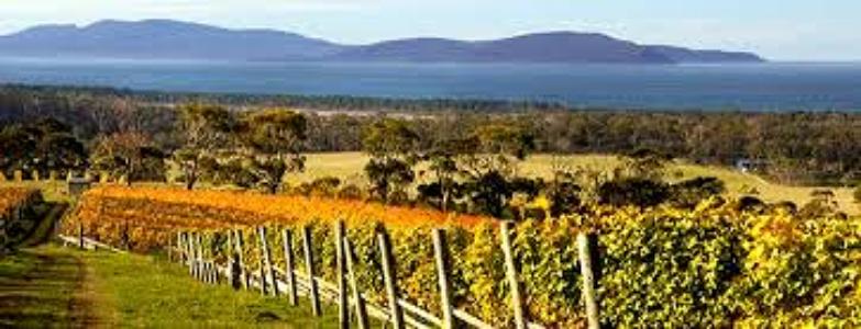 tasmania vineyard