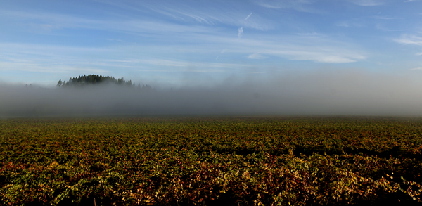 russian river valley foggy day
