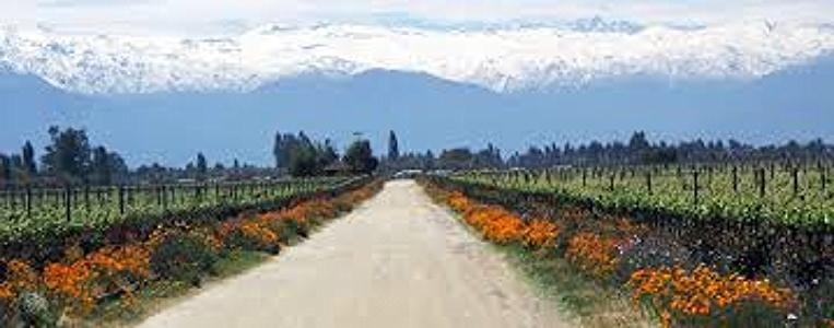 maipo valley.jpg