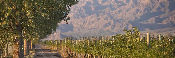 El pedregal vineyard Terrazas winery