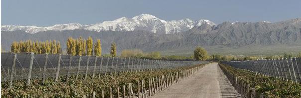 Las computeras vineyard Terrazas winery