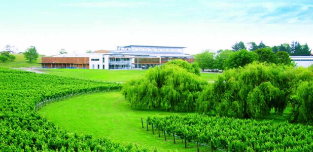 Villa Maria Auckland winery, NZ