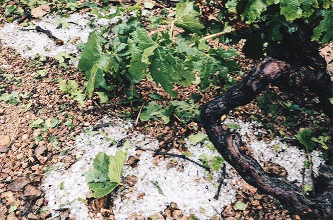 Beaujolais hail storm july 10 2017